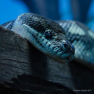 Australia Zoo (10)