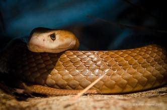Australia Zoo (11)