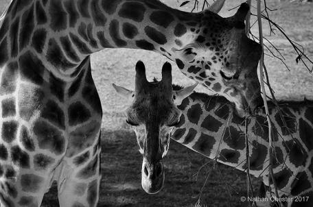 Australia Zoo (5)