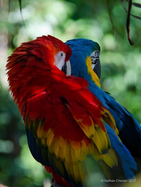 Australia Zoo (6)