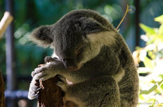 Australia Zoo (7)