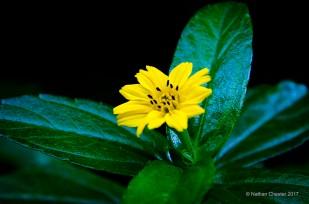 Flora (1)