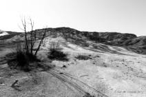Landscape (7)